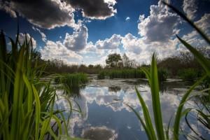 Parco del Serio, Bioblitz 2017 @ Parco del Serio